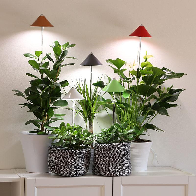 Växtlampor i olika färg för krukväxter inomhus