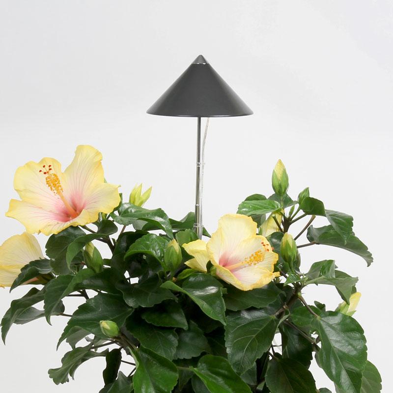 SunLite växtlampa för inomhusodling