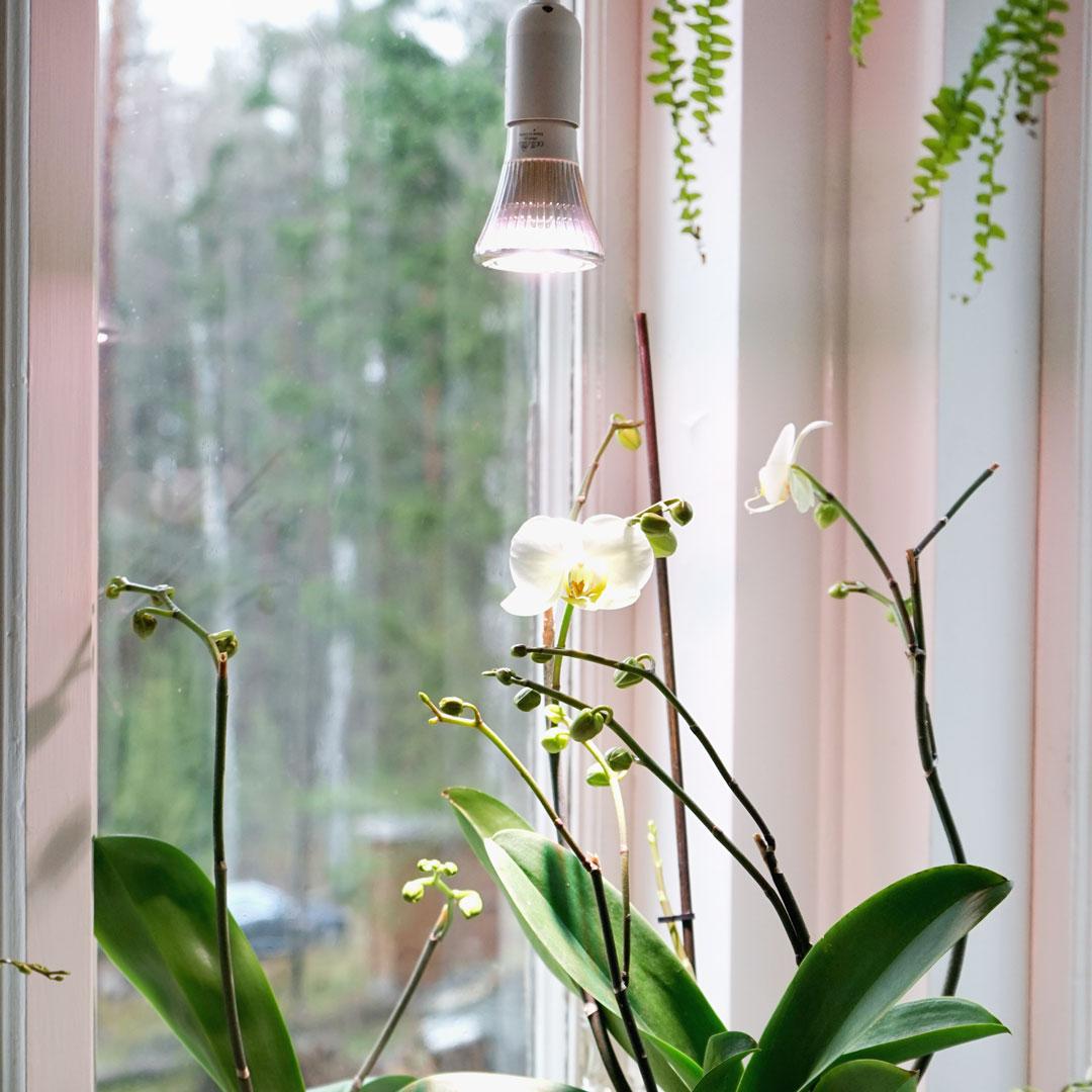 Växtlampa Standard 6W, extrabelysning i fönster