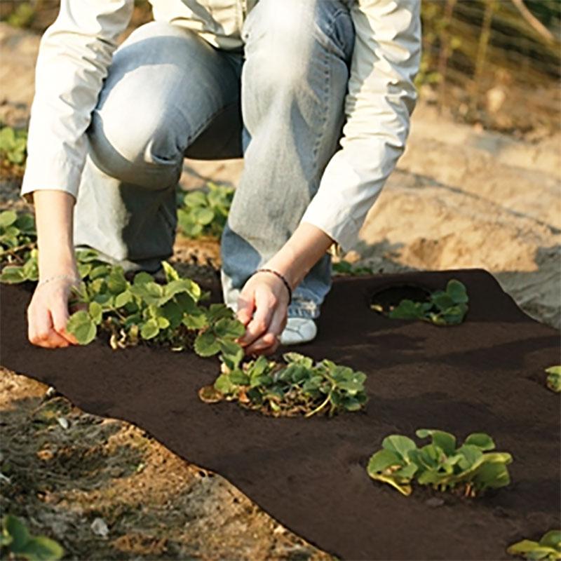 Kokosmatta, mörkbrun, Kokosmatta för vinterskydd av växter