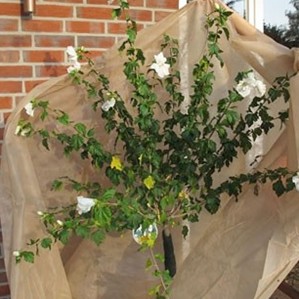 Fiberduk 17gram, beige - 2-pack, Fiberduk för skydd av växter 17 gram