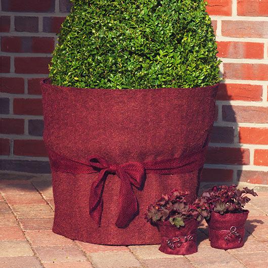 Kokosmatta, blackberry-Kokosmatta för vinterskydd av växter