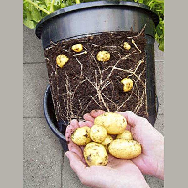 PotatoPot - Potatishink,