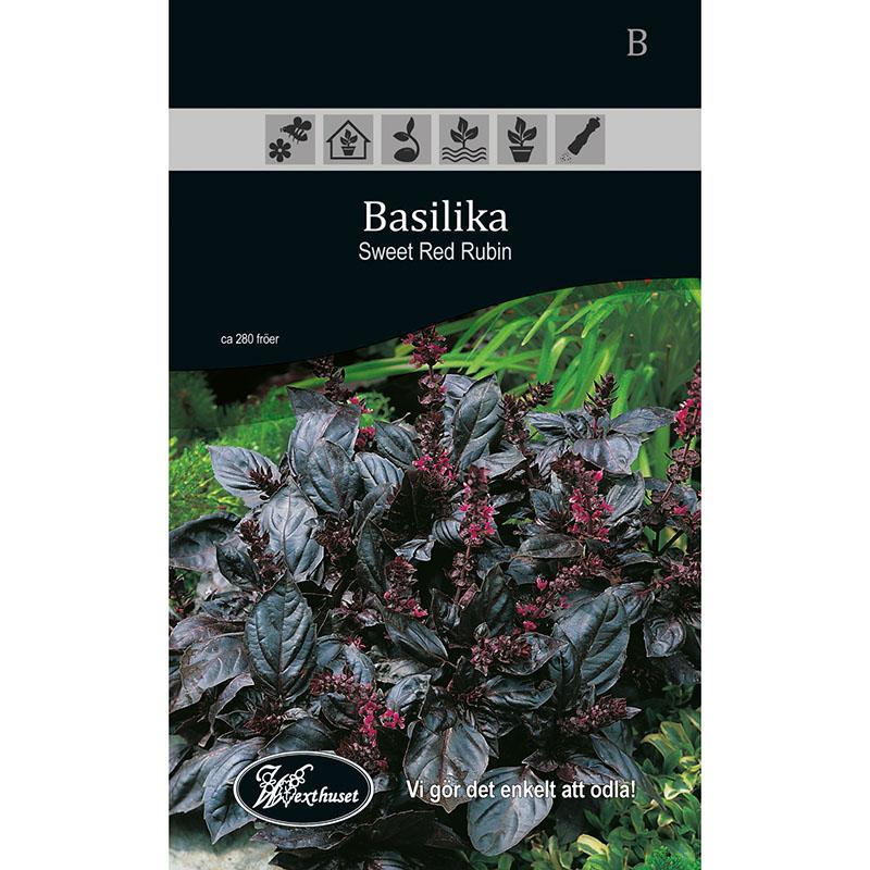 Frö för odling av Basilika - Sweet Red Rubin