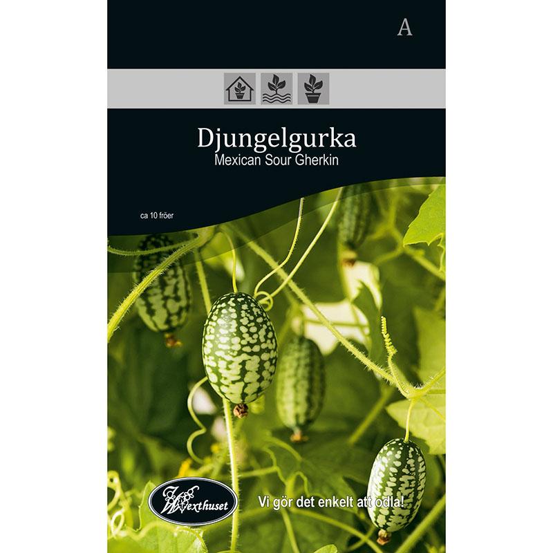 Frö för odling av Djugelgurka - Mexican Sour Gherkin