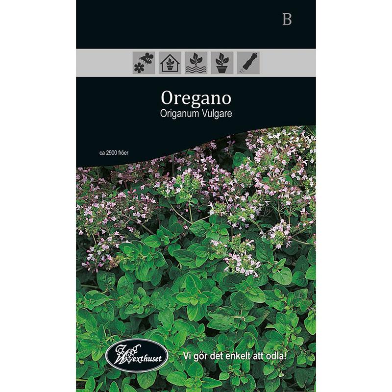 Frö för odling av Oregano