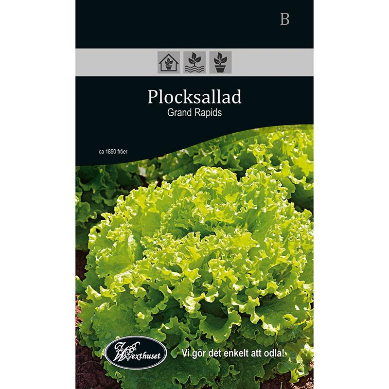 Frö för odling av Plocksallad -  Grand Rapids