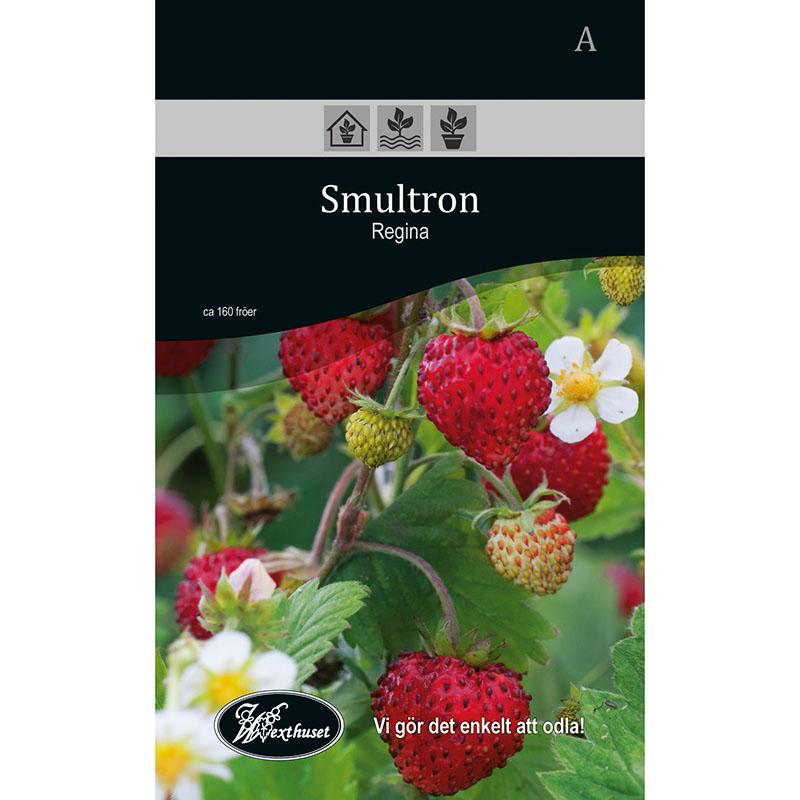 Frö för odling av Smultron - Regina
