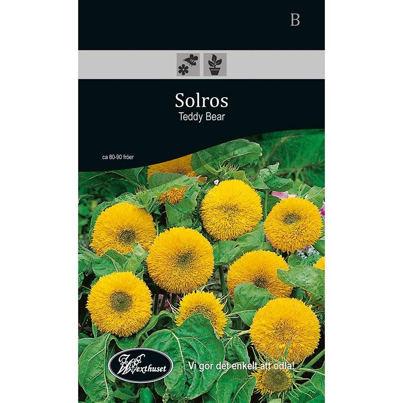 Frö för odling av Solros - Teddy Bear