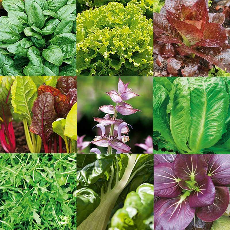 Frö till mix av bladgrönsaker lämpliga för inomhusodling