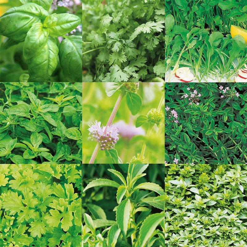 Frö till mix av kryddväxter lämpliga för inomhusodling