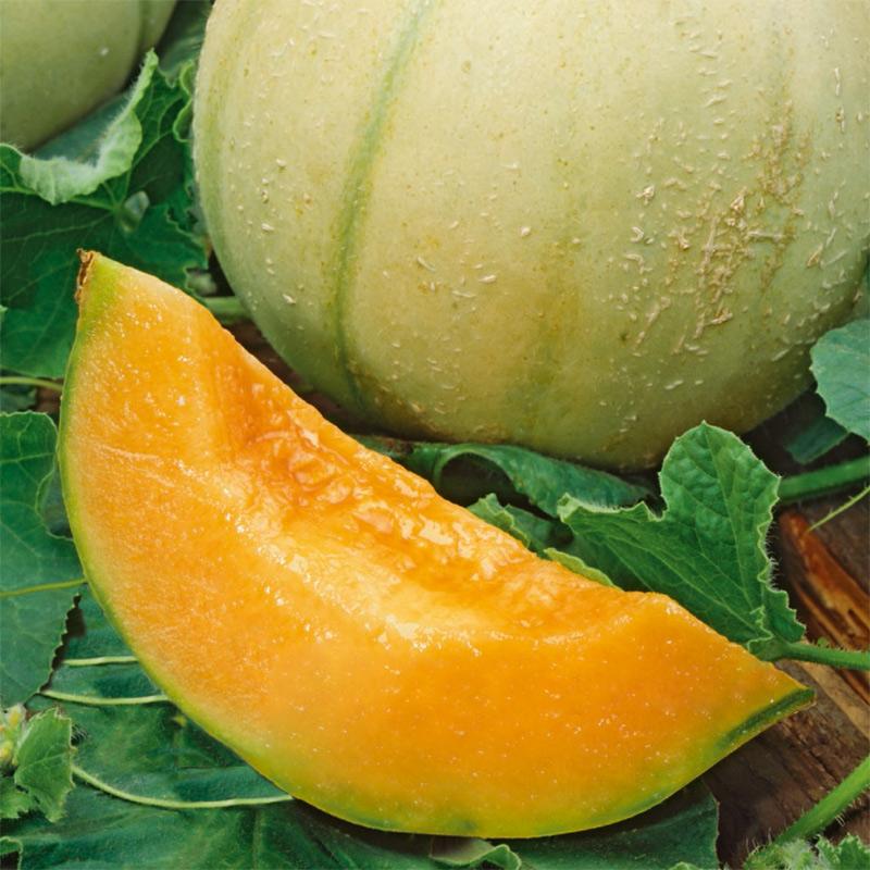 Fröer till Melon - Charentais