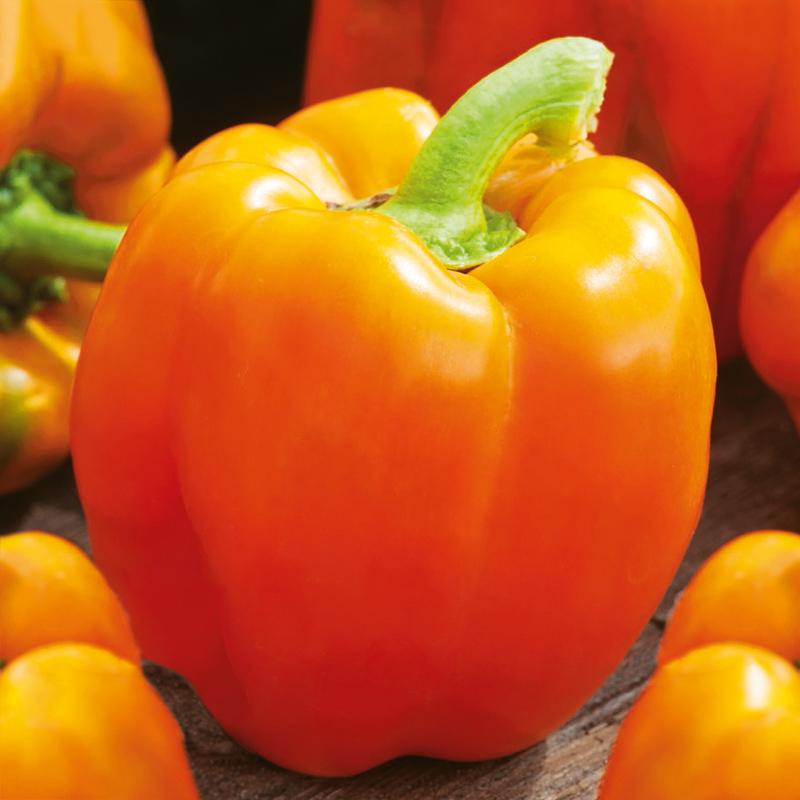 Fröer till Paprika - Gourmet
