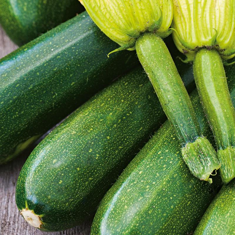 Ekologiskt frö till Squash -  Verte Noire Maraîchère