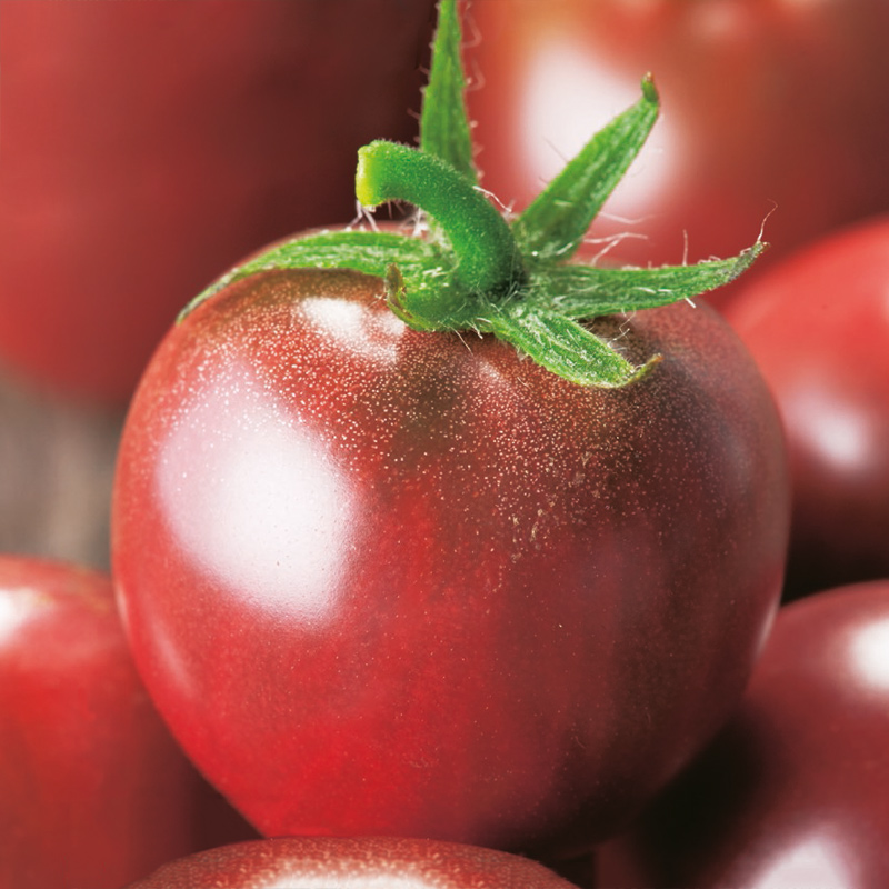 Fröer till Tomat - Black Cherry