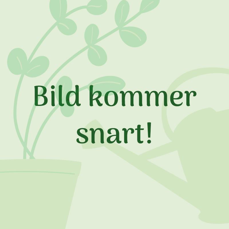 Växtbelysning Primula Grow svart, 10 watt för inomhusväxter