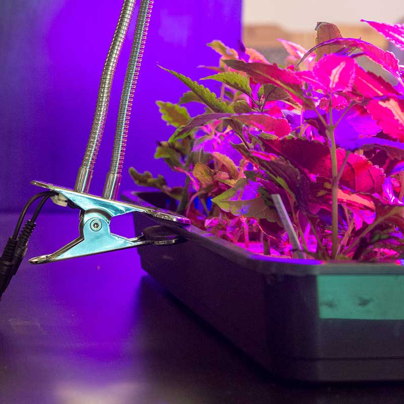 Växtbelysning Gemini Grow Light LED fäst på odlingsbricka