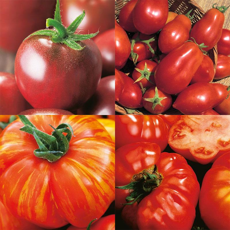 wexthusets tomatmix med frö till fyra helt olika sorters tomater