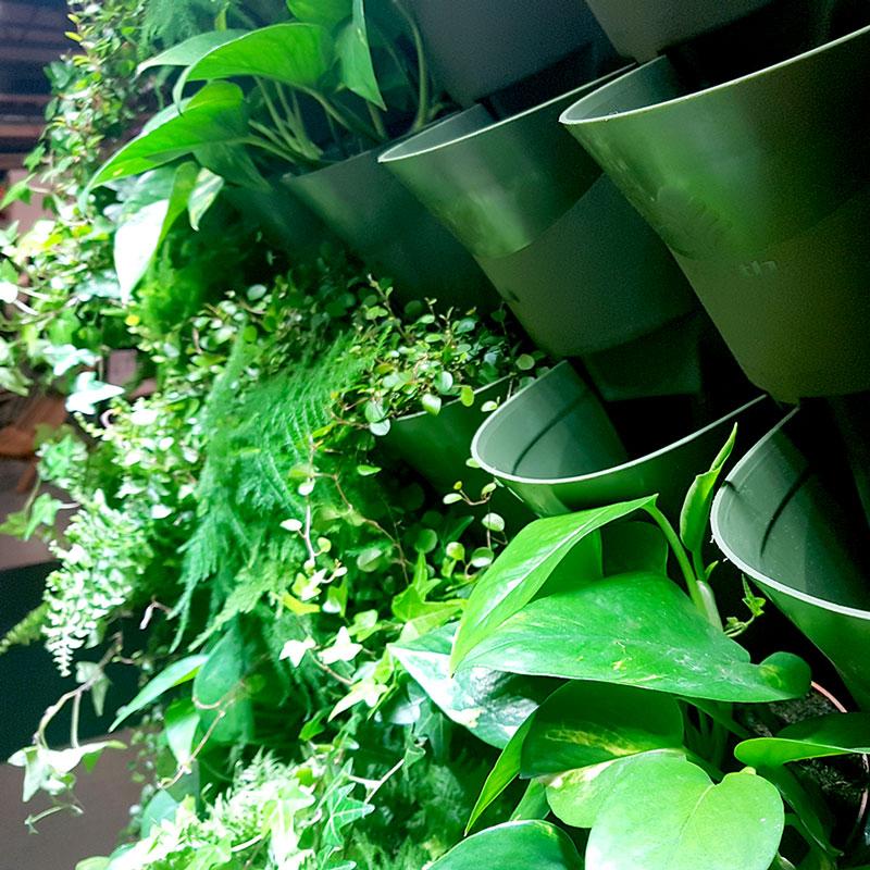 Grön plantering i växtväggen Wonderwall på Nordiska Trädgårdar 2018