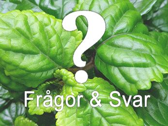Vad är skillnaden på ekologiska frön och vanliga frön?