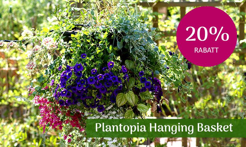 REA Ampel plantopia, hanging basket