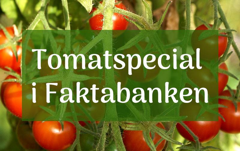 fakta och råd om tomatodling i faktabanken