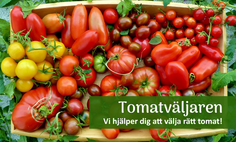 Tomatväljaren - få hjälp att välja rätt tomat.