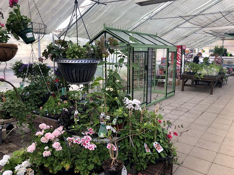 Växthusutställning på Löta handelsträdgård