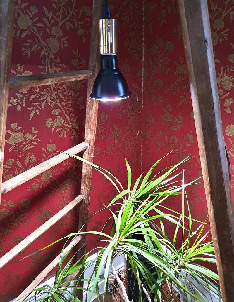 Växtlampa Primula indoor