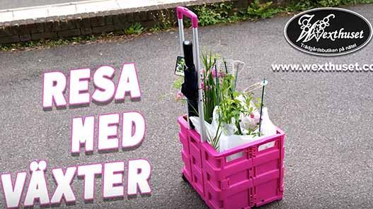 Resa med växter